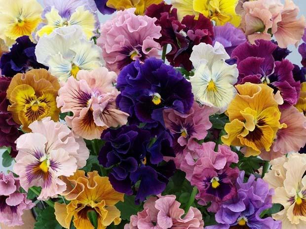 Flores precisam de cuidados especiais no inverno!