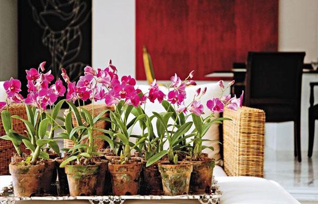 Dicas para cuidar de orquídeas em casa!