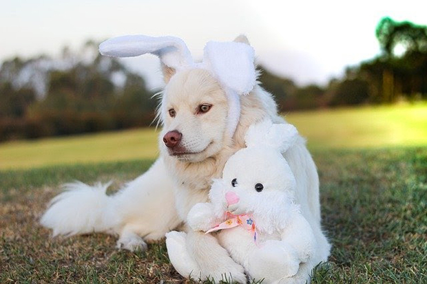 Depois da Páscoa: deixe seu pet longe do chocolate!